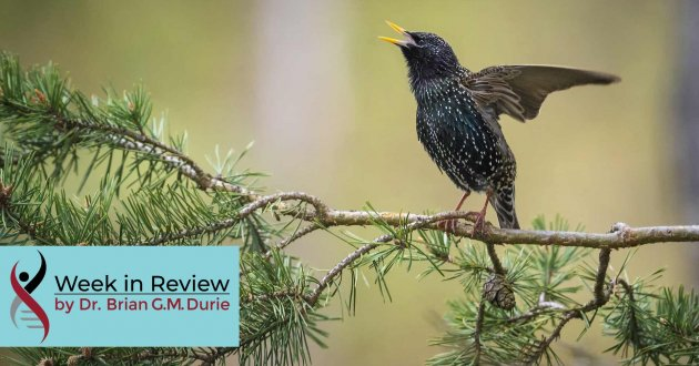 Black Starling Bird