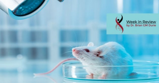 Blog image mice in a laboratory setting