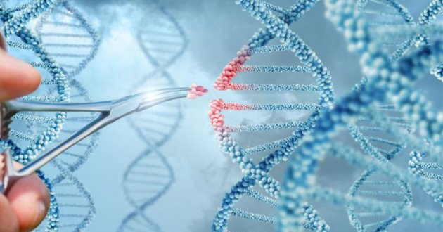 researcher manipulates an graphic of dna