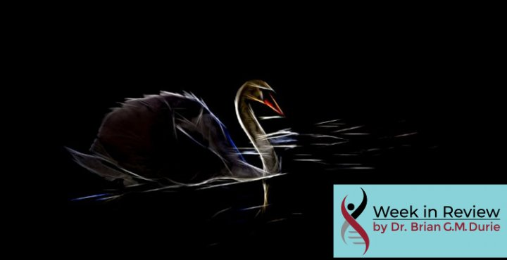 Creative photo filter creates this striking image of a dark swan on black water