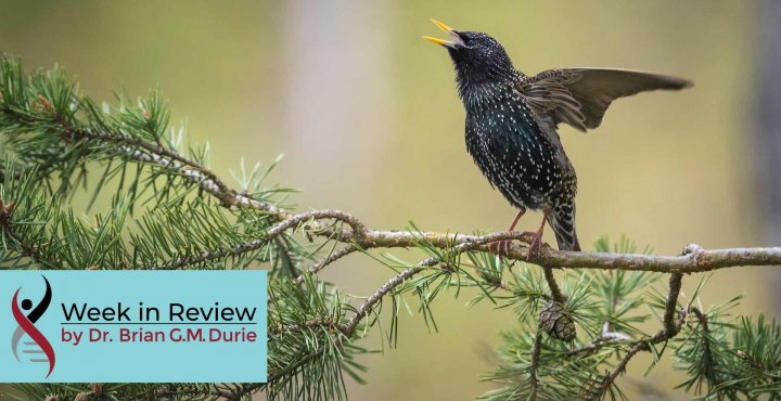 Black Starling Bird