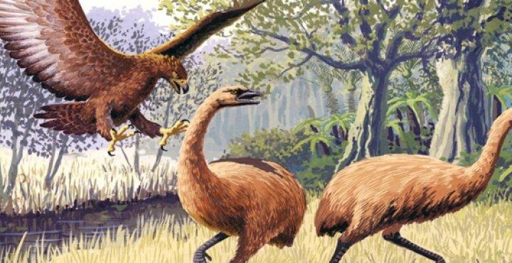 giant hass eagle and bush moa birds