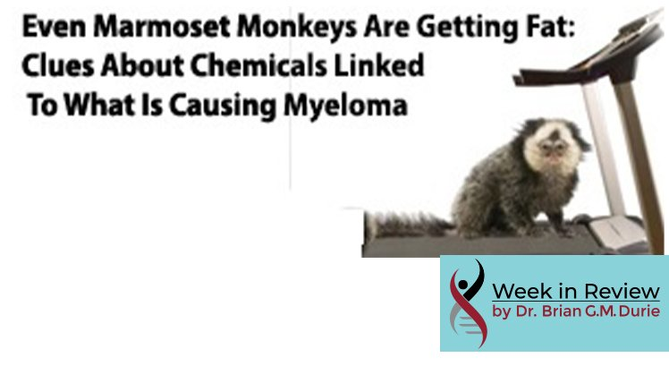 Even Marmoset Monkeys Are Getting Fat: Clues About Chemicals Linked To What Is Causing Myeloma text overlay on image of marmoset monkey on a treadmill