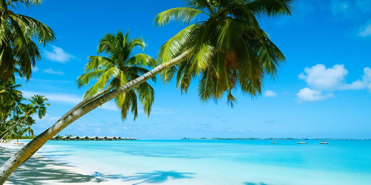 Hawaiian coastline beach with palm trees and sand