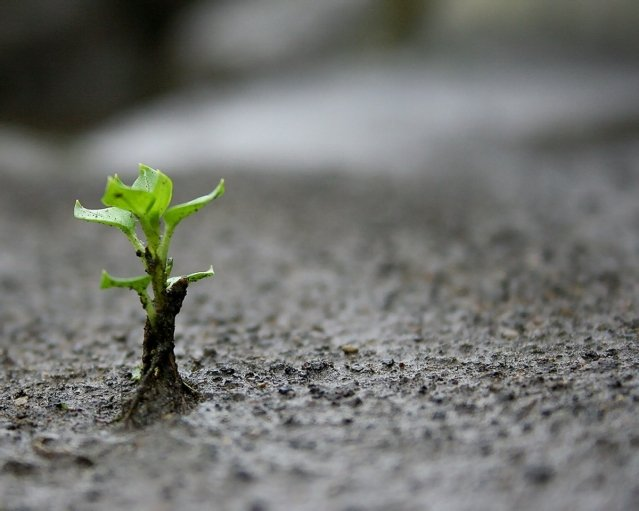 A Plant grows through a cement road