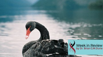 Black Swan on a lake with mountains in the distance