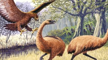 giant hass eagle and bush moa birds